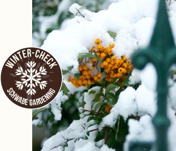 Wintercheck Schwabe Gardening Garten Bewässerung Gartenpflege Gartengestaltung Klemm Design