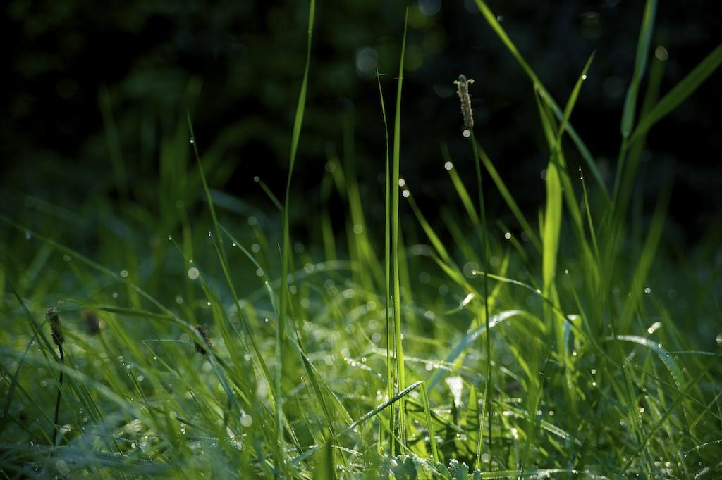 Schwabe Gardening Garten Gräser Pflege Bewässerung